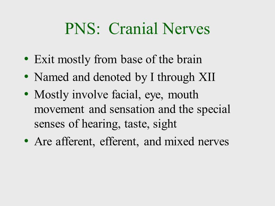 PNS: Cranial Nerves Exit mostly from base of the brain