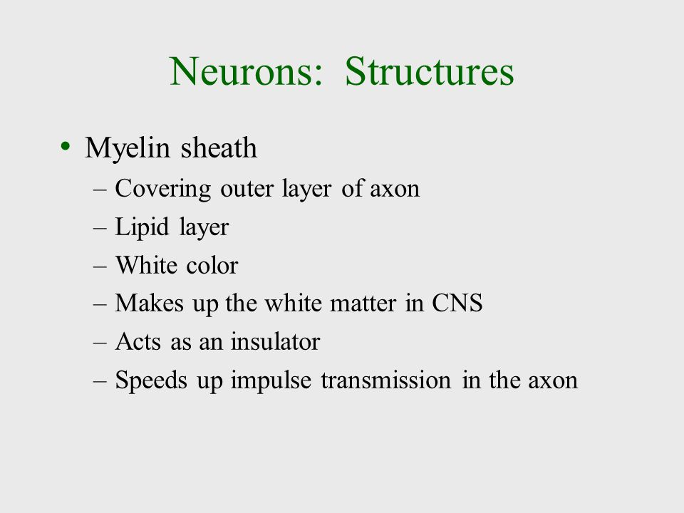 Neurons: Structures Myelin sheath Covering outer layer of axon
