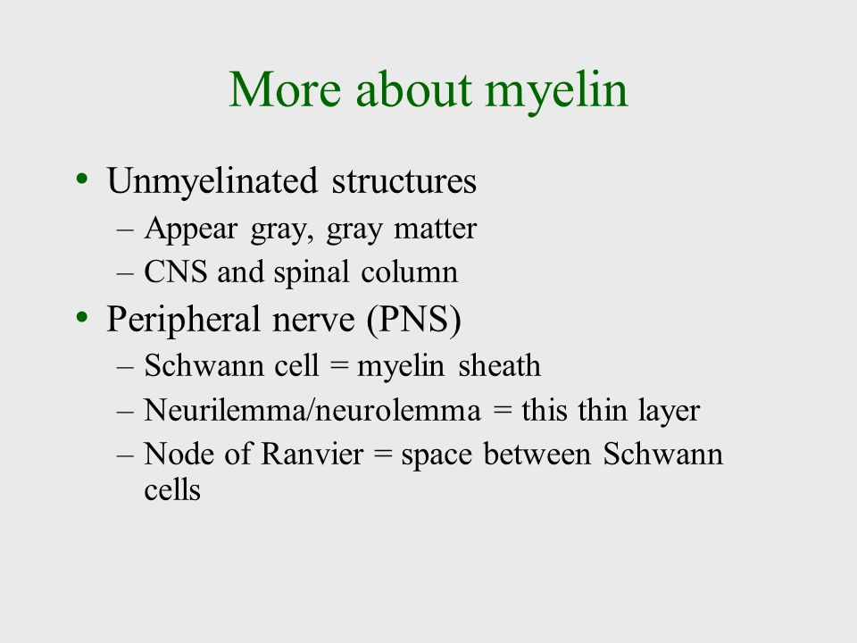 More about myelin Unmyelinated structures Peripheral nerve (PNS)