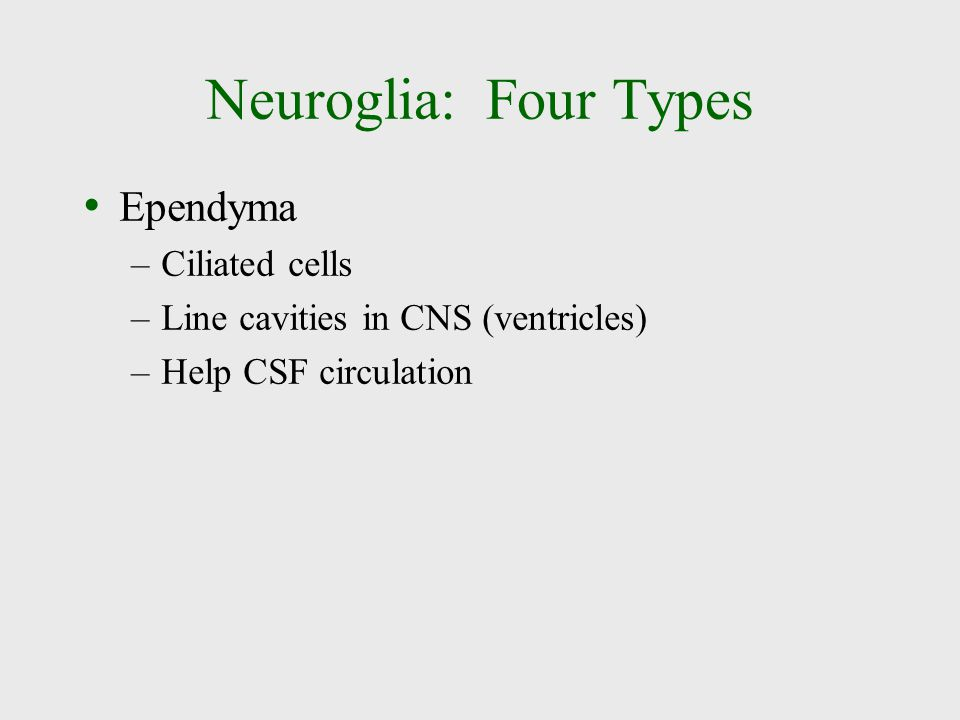 Neuroglia: Four Types Ependyma Ciliated cells