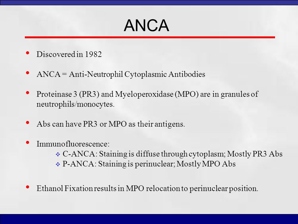 ANCA Discovered in 1982 ANCA = Anti-Neutrophil Cytoplasmic Antibodies