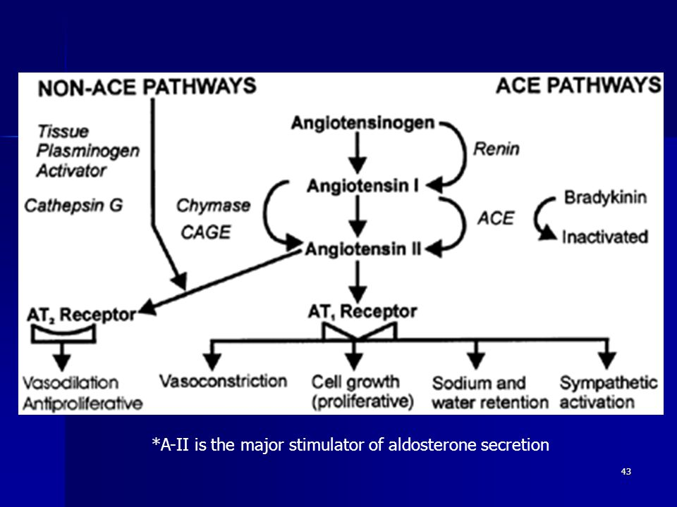 *A-II is the major stimulator of aldosterone secretion