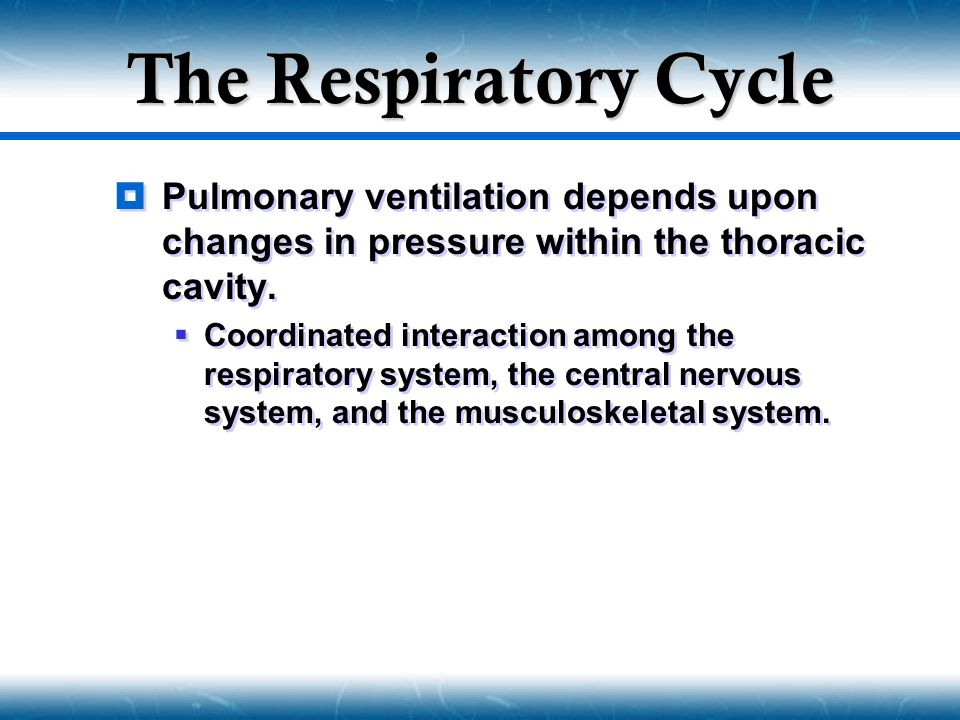 The Respiratory Cycle Pulmonary ventilation depends upon changes in pressure within the thoracic cavity.