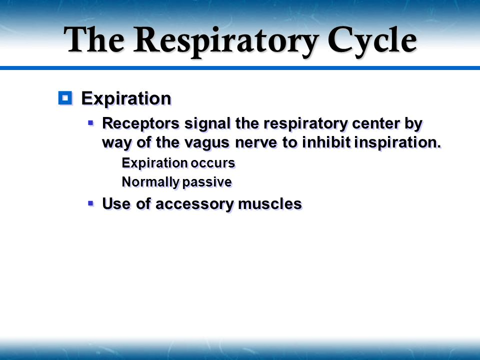 The Respiratory Cycle Expiration