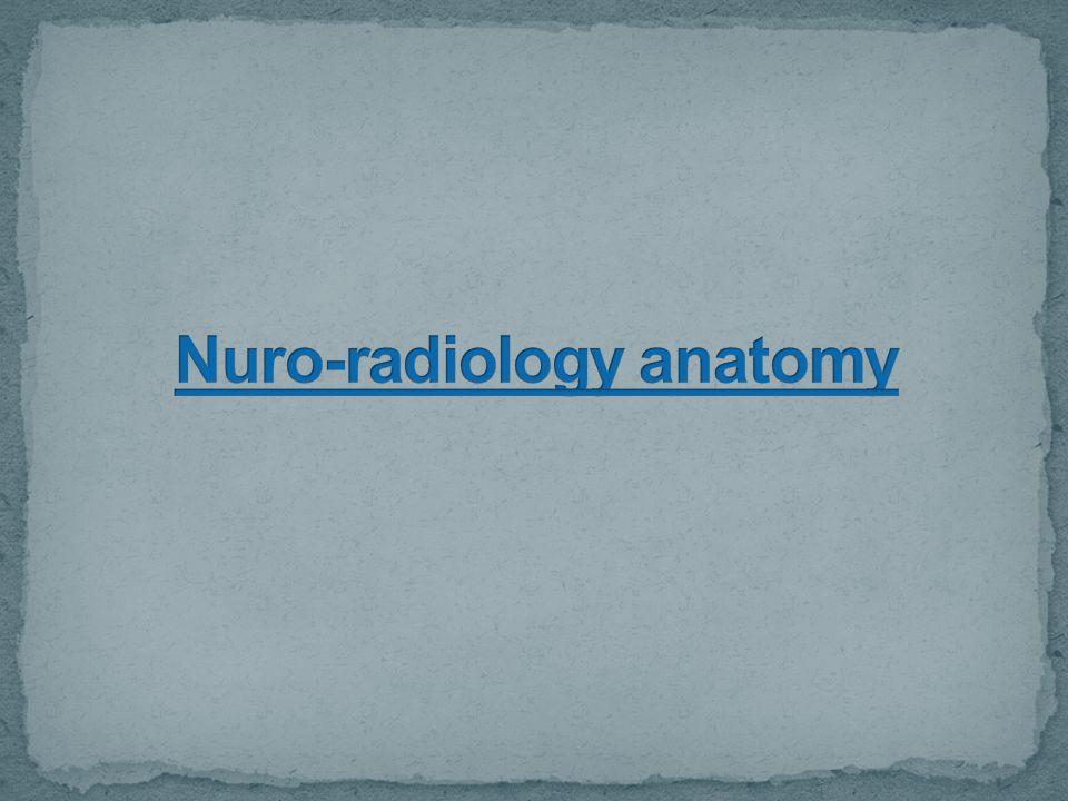 Nuro-radiology anatomy