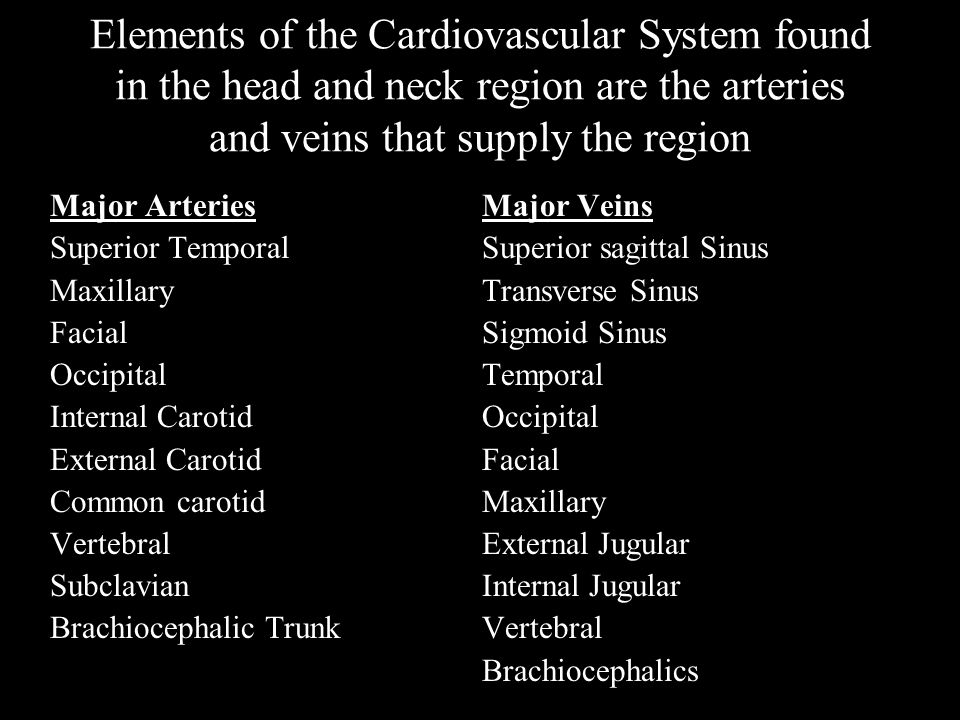Elements of the Cardiovascular System found in the head and neck region are the arteries and veins that supply the region