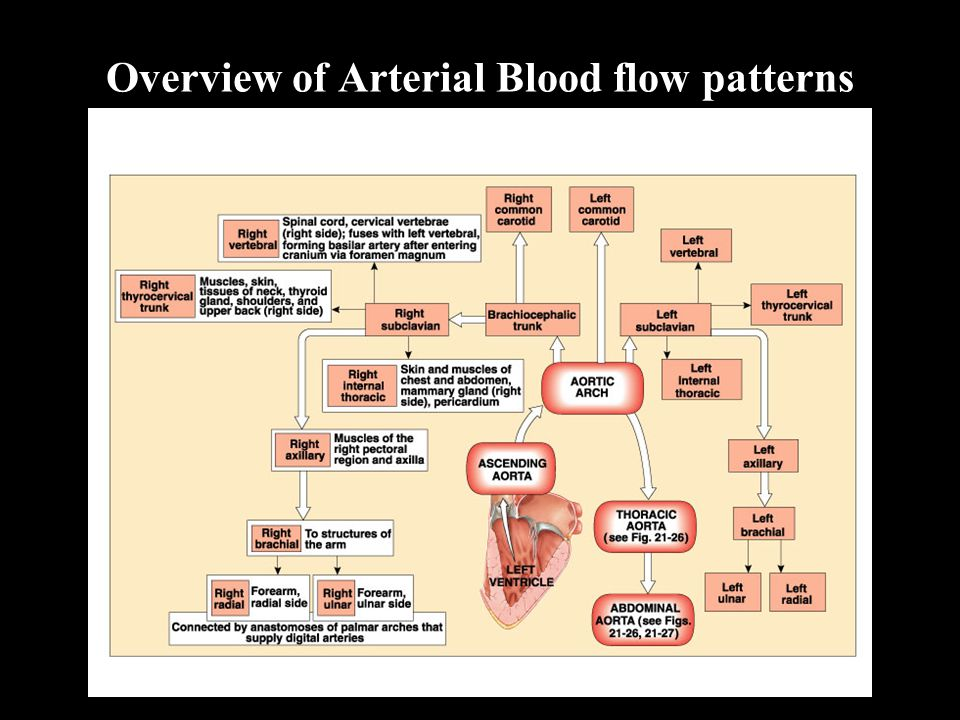 Overview of Arterial Blood flow patterns