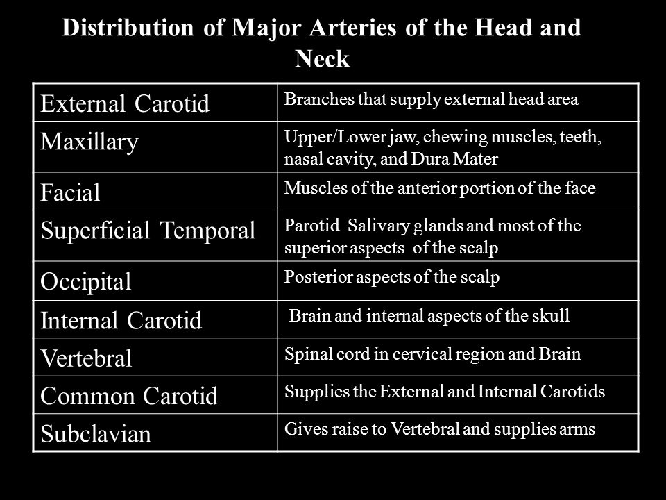 Distribution of Major Arteries of the Head and Neck