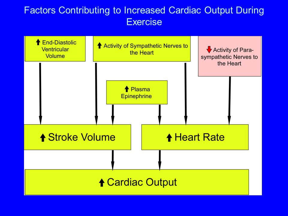 Factors Contributing to Increased Cardiac Output During Exercise