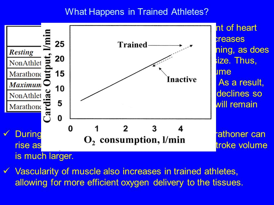 What Happens in Trained Athletes