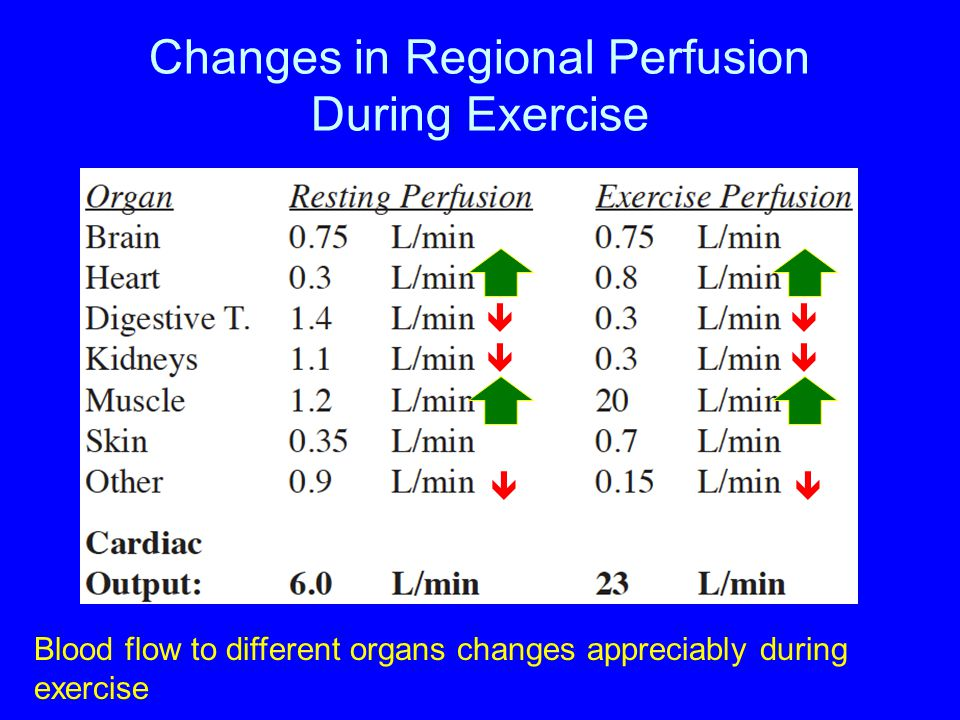 Changes in Regional Perfusion During Exercise