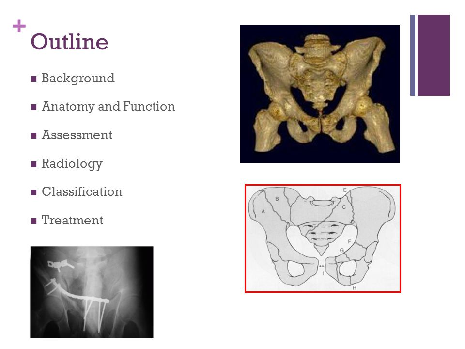 Outline Background Anatomy and Function Assessment Radiology