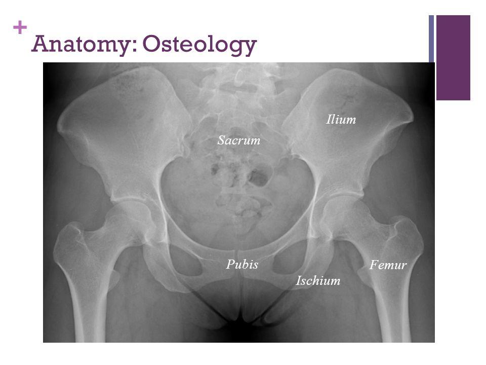 Anatomy: Osteology Ilium Sacrum Femur Pubis Ischium