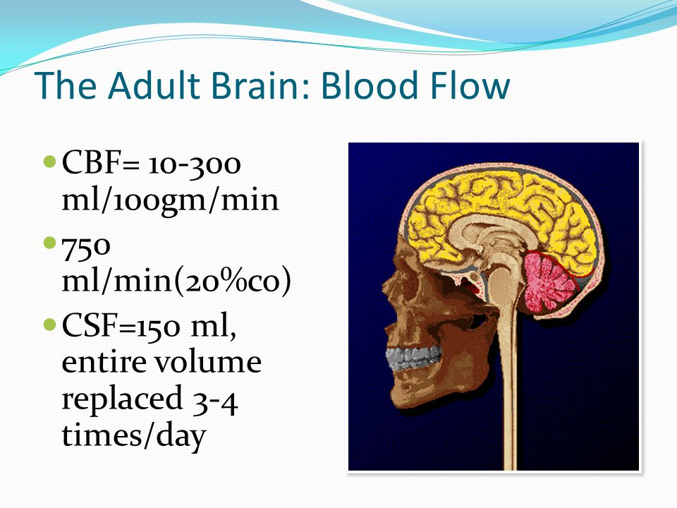 The Adult Brain: Blood Flow