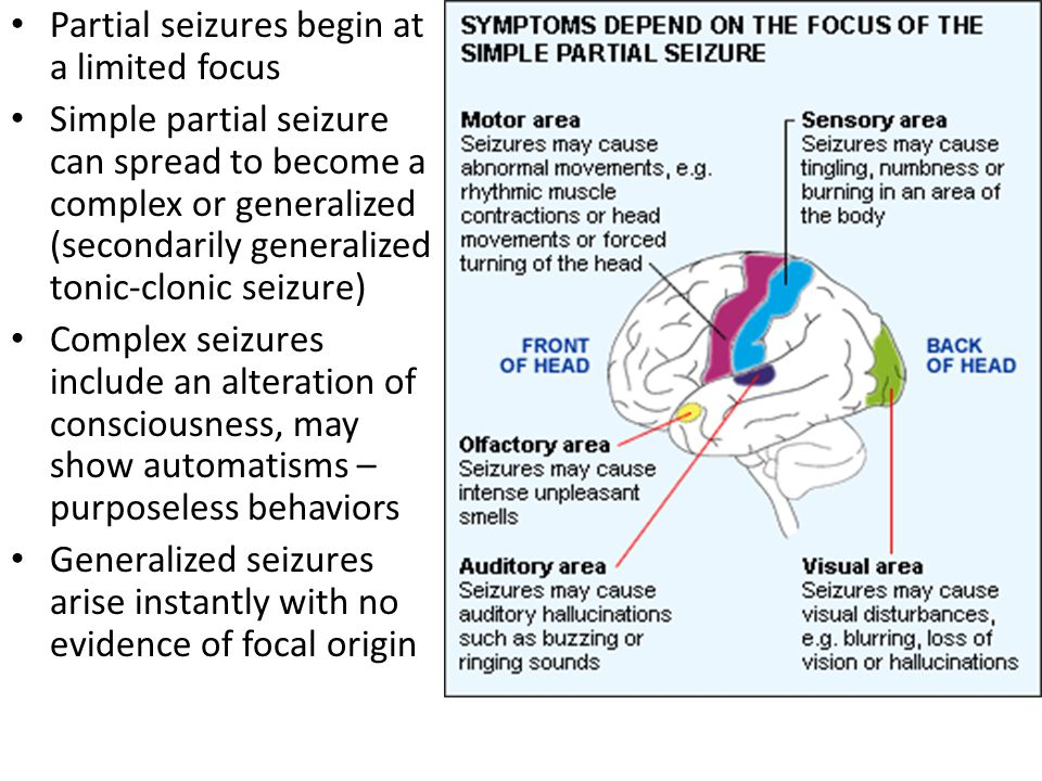 Partial seizures begin at a limited focus