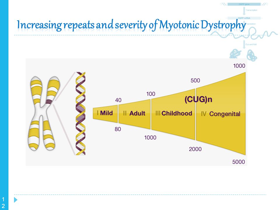 Increasing repeats and severity of Myotonic Dystrophy