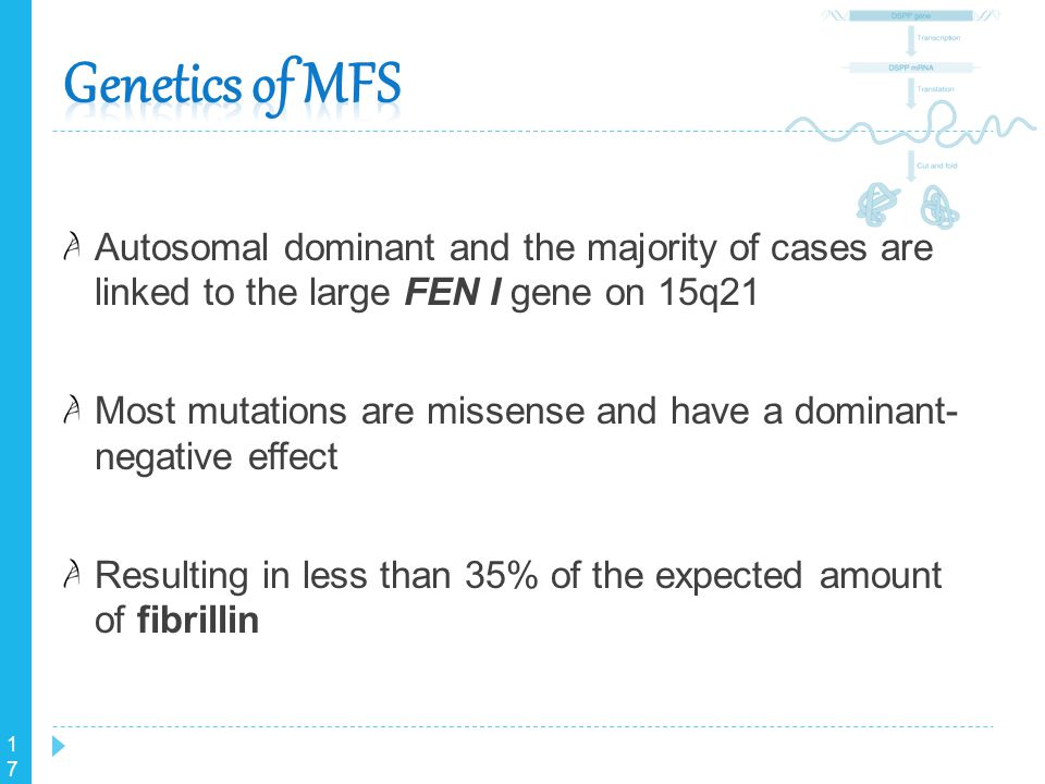 Genetics of MFS Autosomal dominant and the majority of cases are linked to the large FEN I gene on 15q21.
