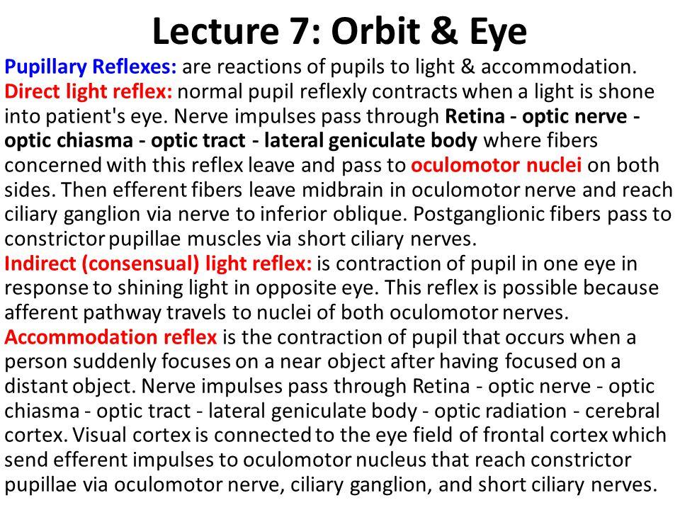 Lecture 7: Orbit & Eye
