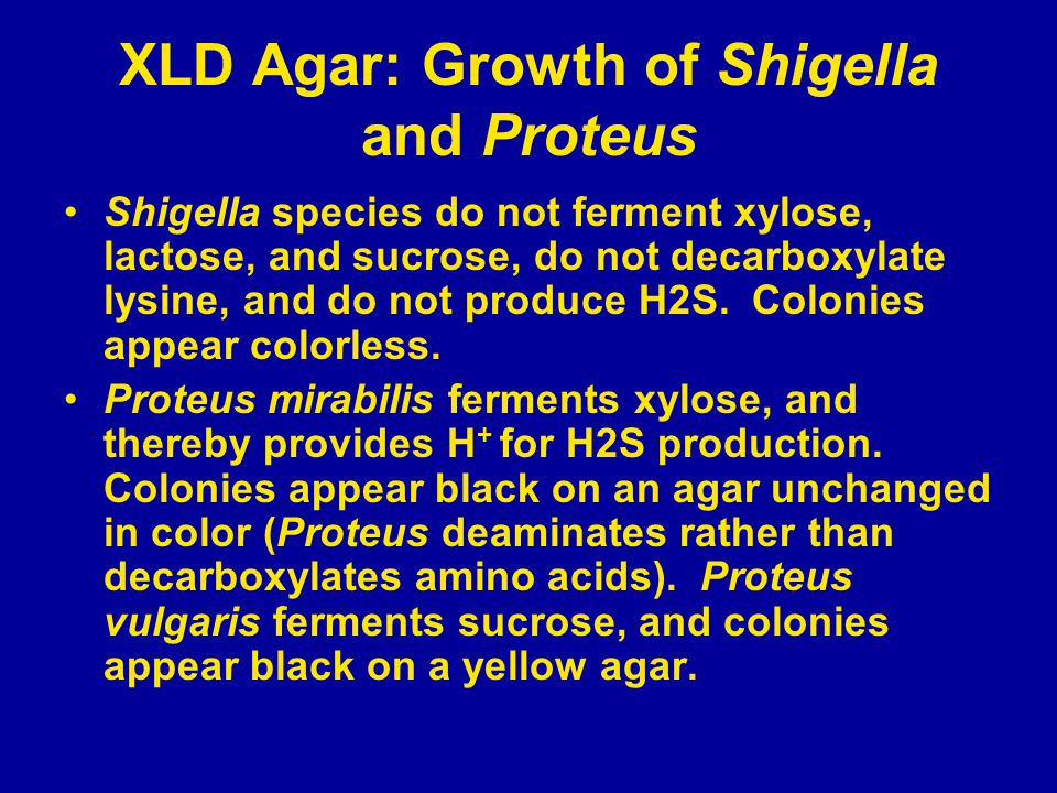 XLD Agar: Growth of Shigella and Proteus