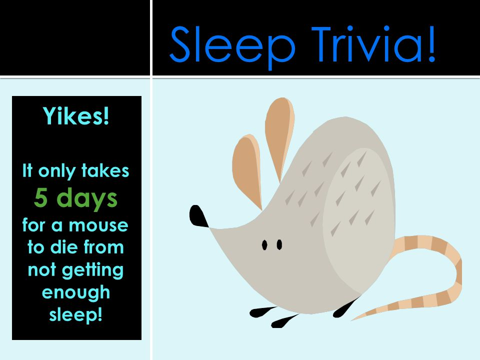 for a mouse to die from not getting enough sleep!