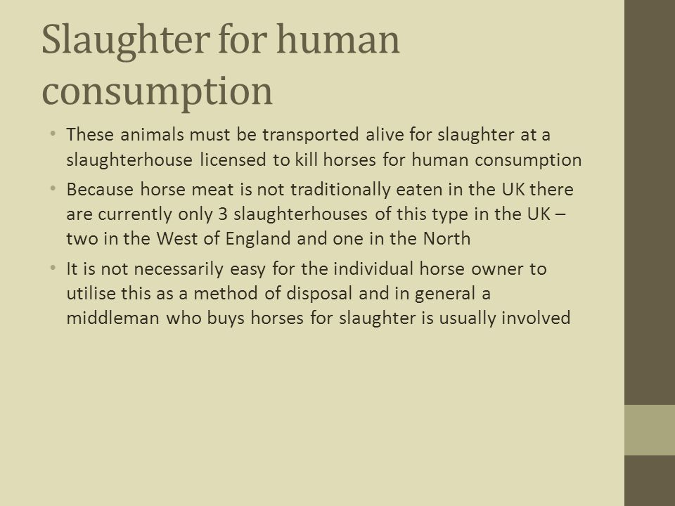 Slaughter for human consumption