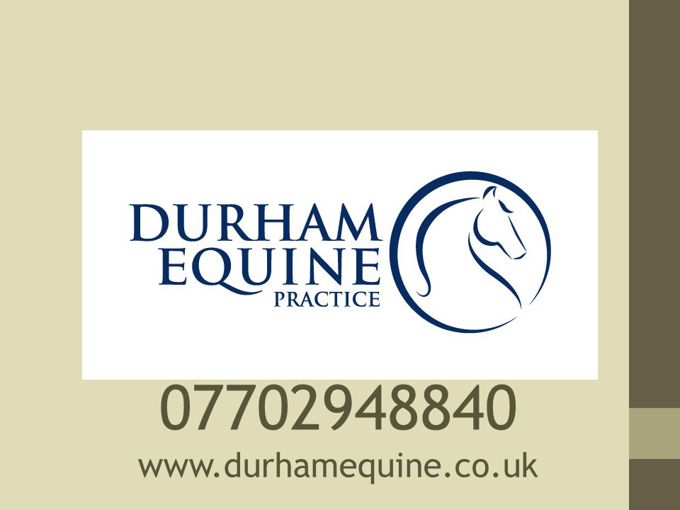 07702948840 www.durhamequine.co.uk