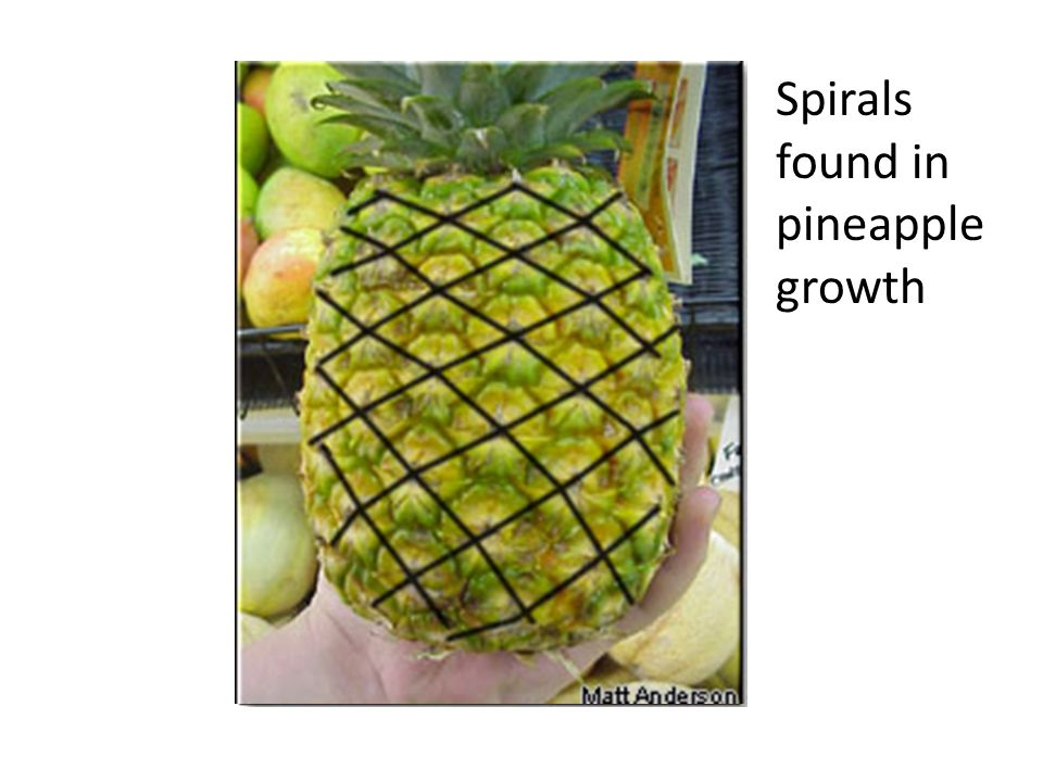 found in pineapple growth