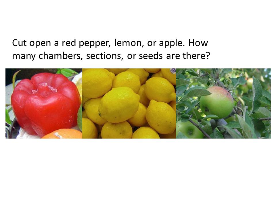 Cut open a red pepper, lemon, or apple. How