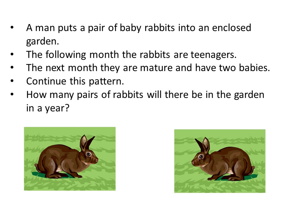 A man puts a pair of baby rabbits into an enclosed garden.