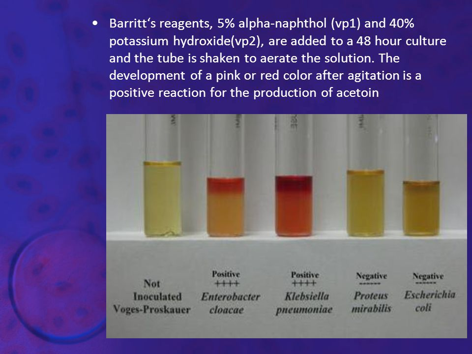 Barritt's reagents, 5% alpha-naphthol (vp1) and 40% potassium hydroxide(vp2), are added to a 48 hour culture and the tube is shaken to aerate the solution.