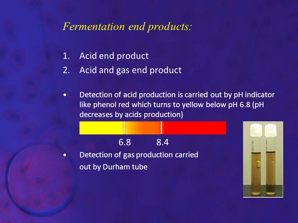 Fermentation end products: