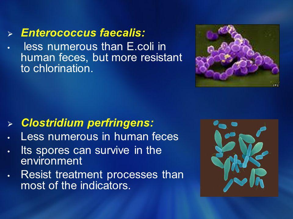 Enterococcus faecalis: