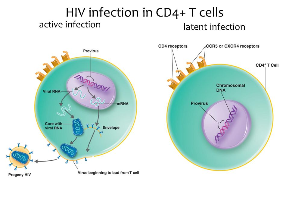 HIV infection in CD4+ T cells