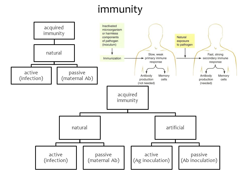 immunity acquired immunity natural active (infection)