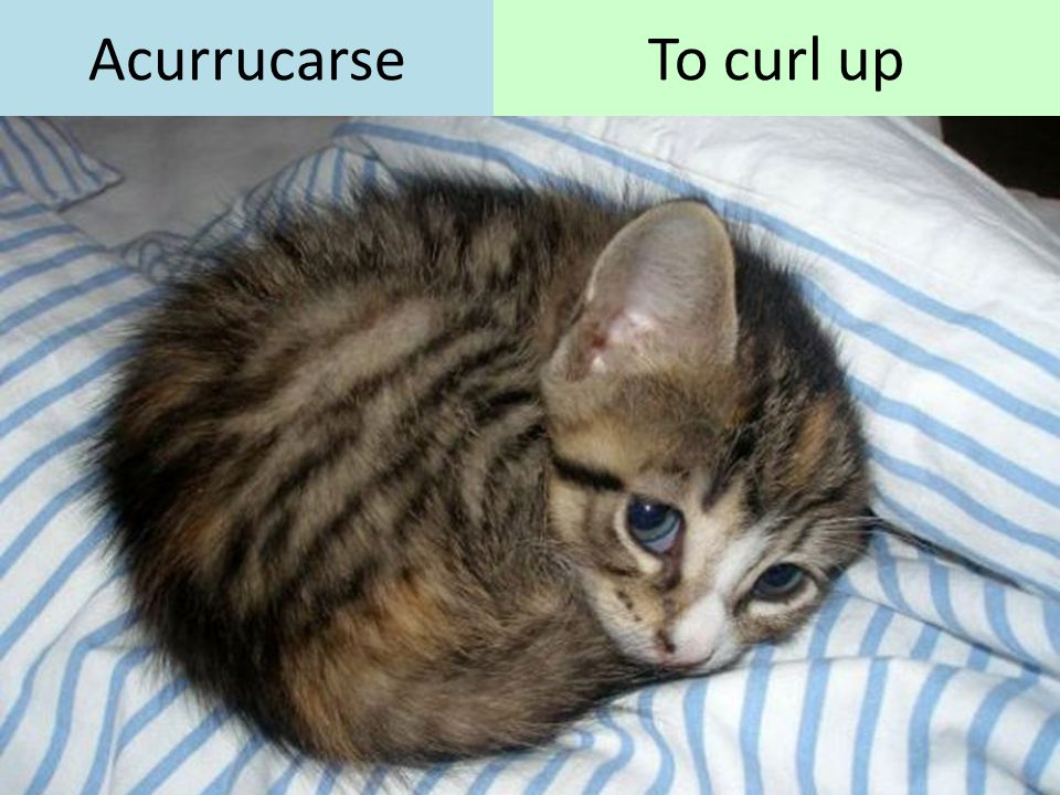 Acurrucarse To curl up