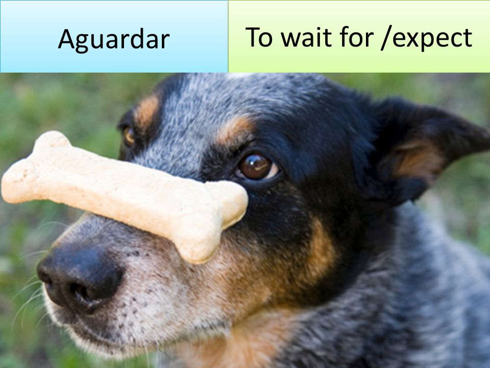 Aguardar To wait for /expect