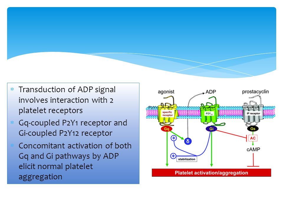 Gq-coupled P2Y1 receptor and Gi-coupled P2Y12 receptor
