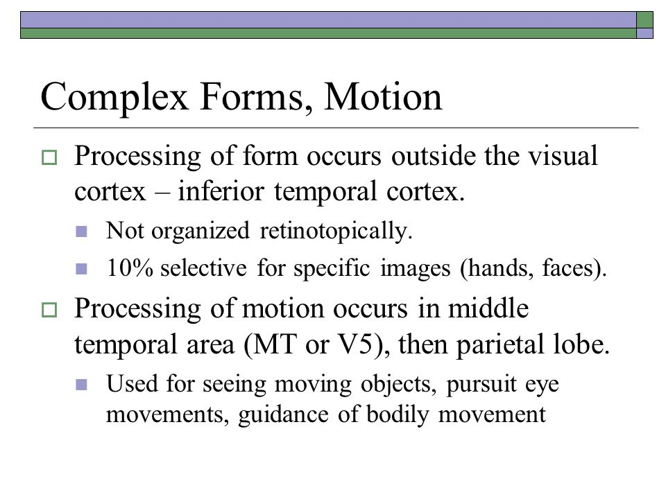 Complex Forms, Motion Processing of form occurs outside the visual cortex – inferior temporal cortex.
