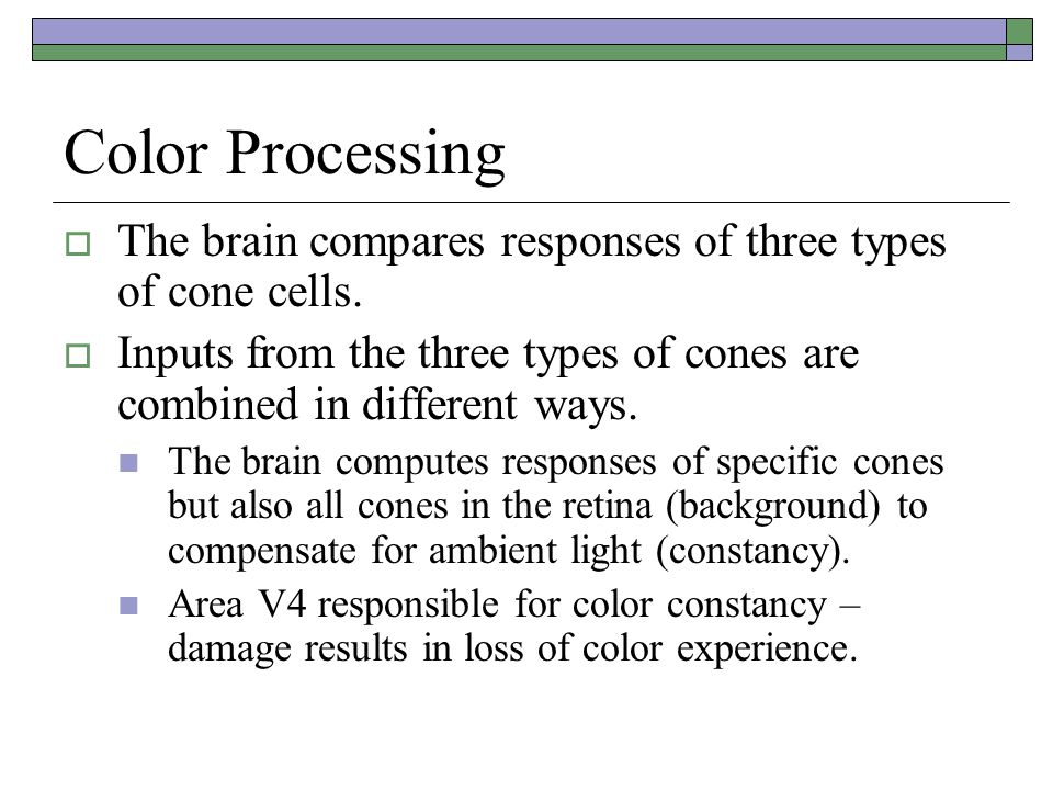 Color Processing The brain compares responses of three types of cone cells. Inputs from the three types of cones are combined in different ways.