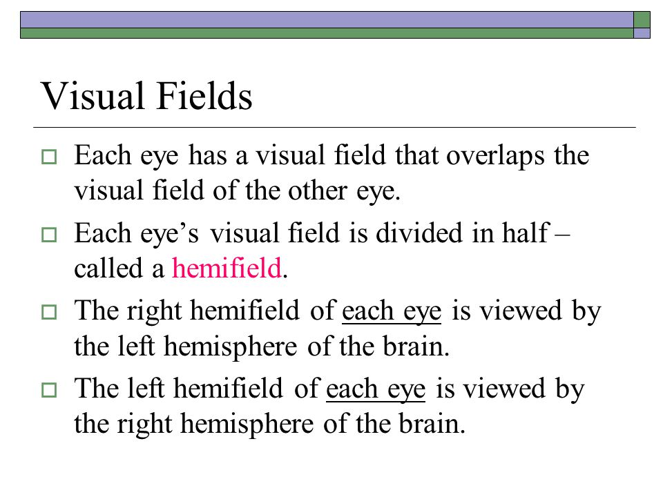 Visual Fields Each eye has a visual field that overlaps the visual field of the other eye.