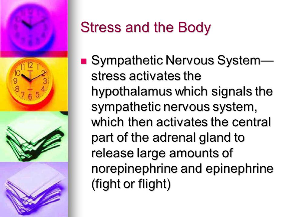 Stress and the Body