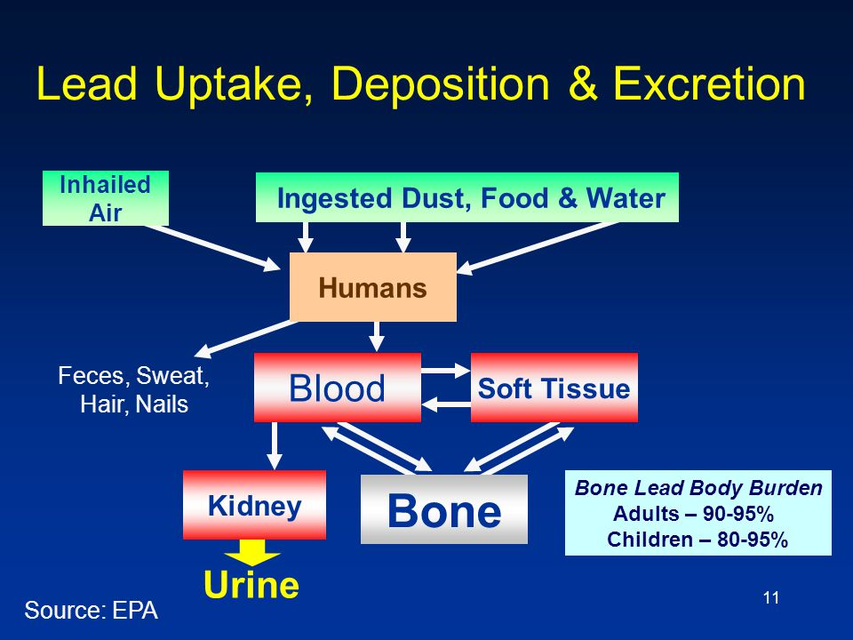Lead Uptake, Deposition & Excretion