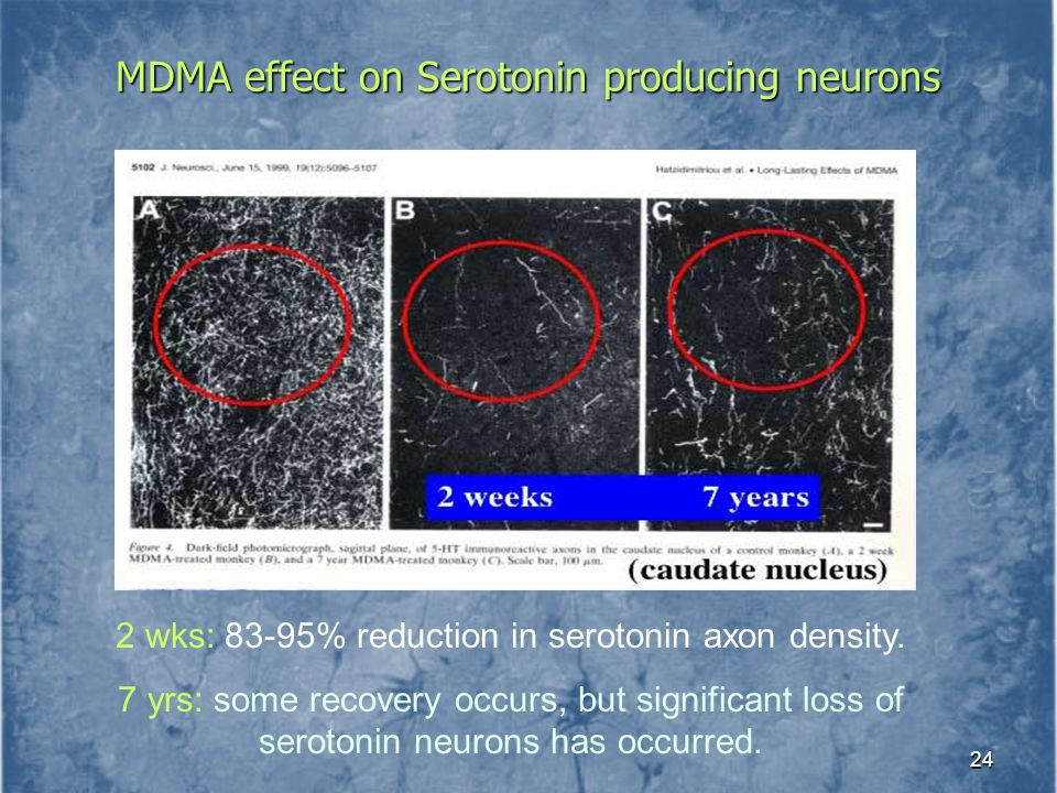 MDMA effect on Serotonin producing neurons