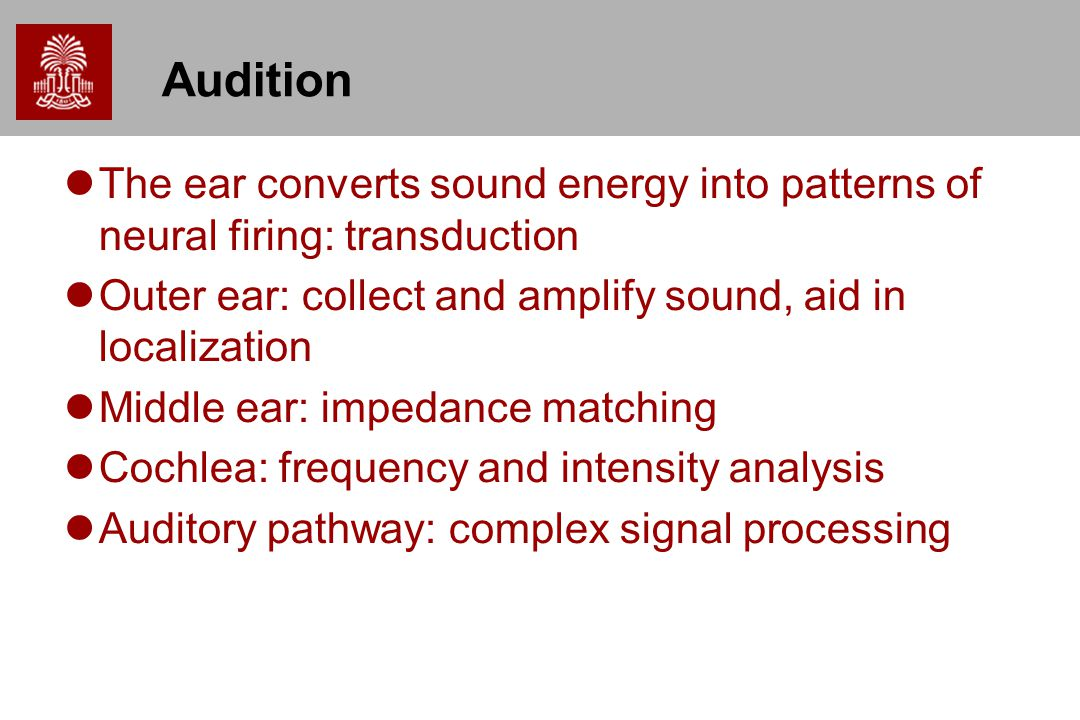 Audition The ear converts sound energy into patterns of neural firing: transduction. Outer ear: collect and amplify sound, aid in localization.