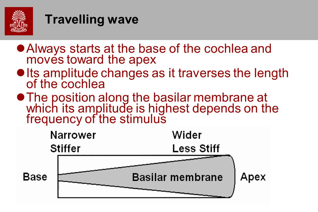 Travelling wave Always starts at the base of the cochlea and moves toward the apex. Its amplitude changes as it traverses the length of the cochlea.