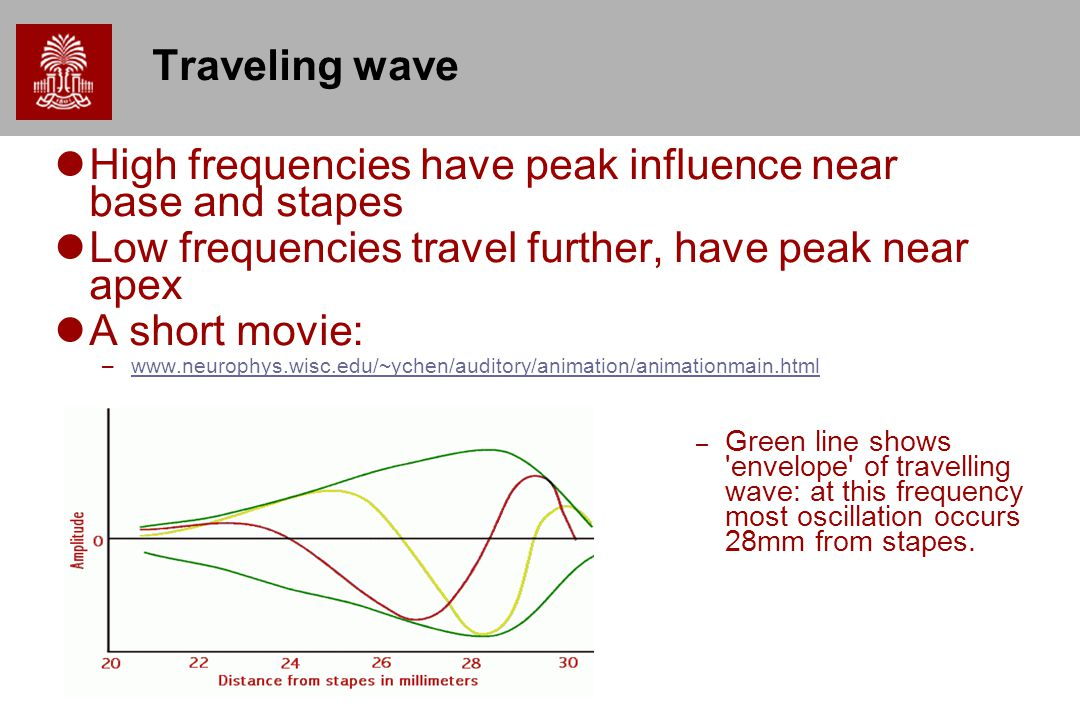 High frequencies have peak influence near base and stapes