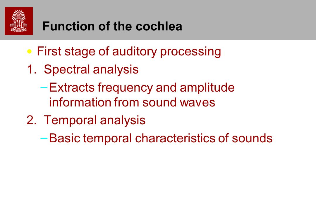 Function of the cochlea