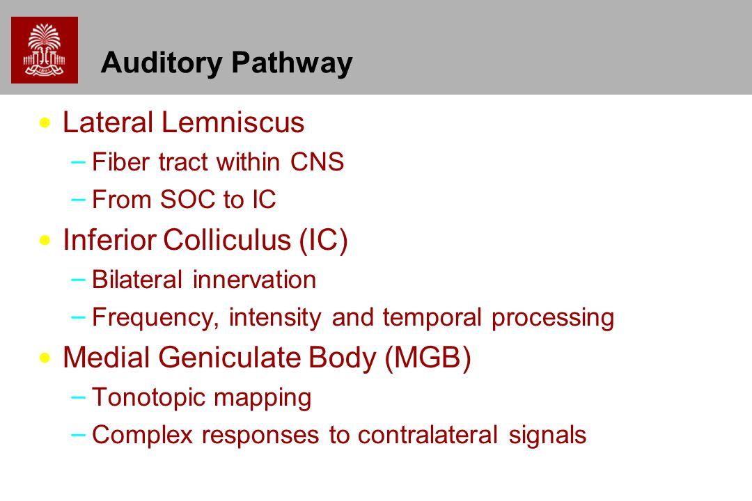 Inferior Colliculus (IC)