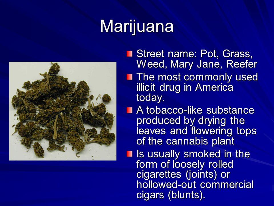 Marijuana Street name: Pot, Grass, Weed, Mary Jane, Reefer
