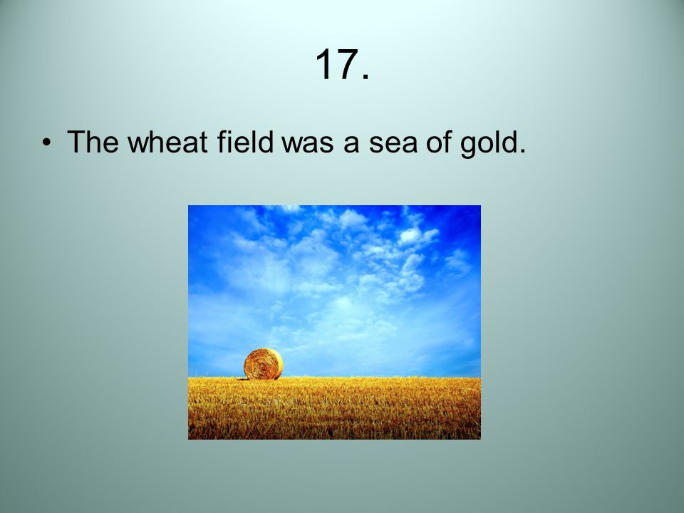 17. The wheat field was a sea of gold.